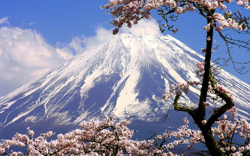 japan-mountains-mount-fuji-cherry-blossoms-flowers-spring-season-HD-Wallpapers